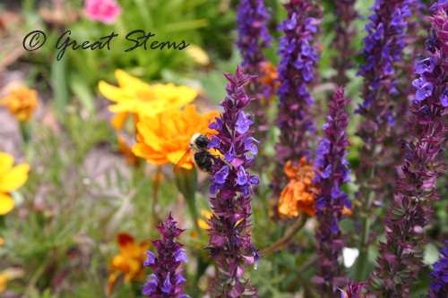 COflowers07-10.jpg