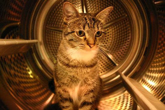 Drycat.jpg