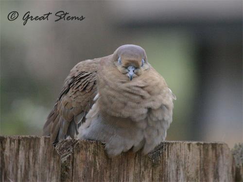 GSwinterbirdsa02-03-11.jpg