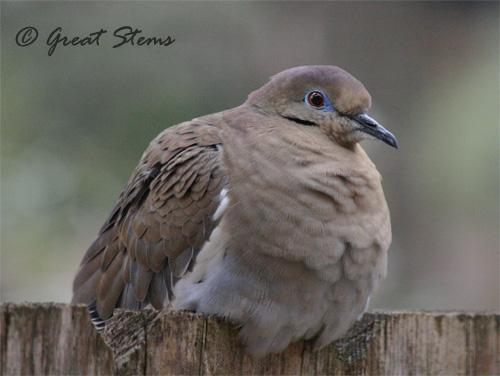 GSwinterbirdsb02-03-11.jpg
