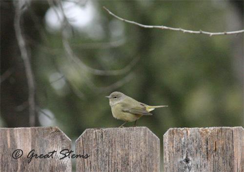 GSwinterbirdsd02-03-11.jpg