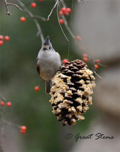 GSwinterbirdsf02-03-11.jpg