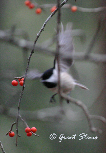 GSwinterbirdsk02-03-11.jpg
