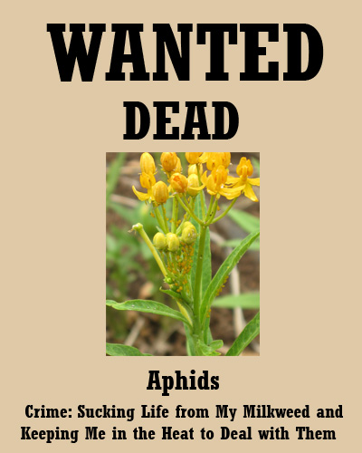 aphids07-29-09.jpg