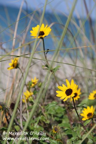 beachflowers03-12-12.jpg
