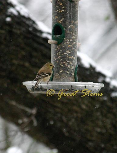 birdb02-23-10.jpg