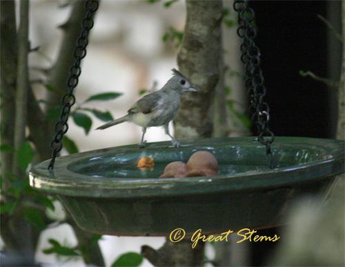 birdbatha08-17-10.jpg