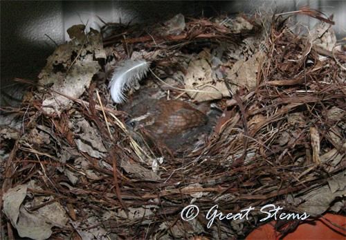 birdie04-19-10.jpg