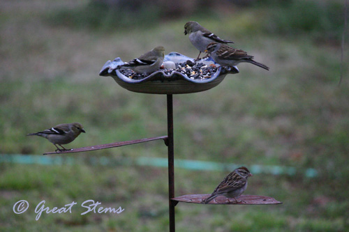 birds02-20-11.jpg