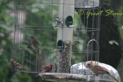 birdsa07-11-10.jpg