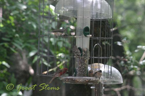 birdsb07-11-10.jpg