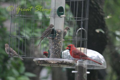 birdsd07-11-10.jpg