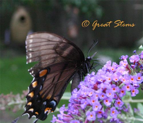 blackeasternc07-08-10.jpg