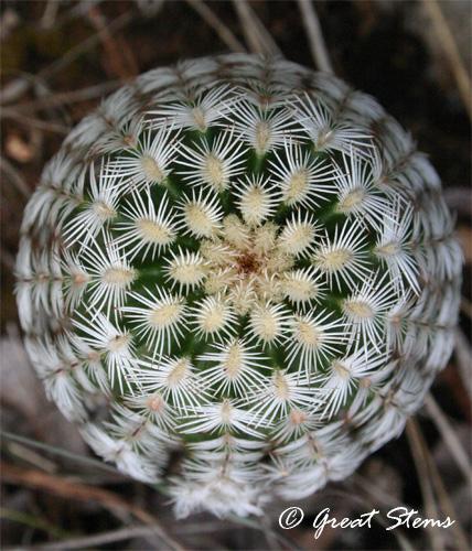 cactus06-11-11.jpg