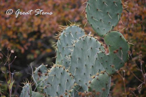 cactusb11-14-10.jpg