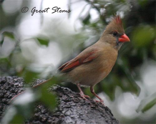 cardinal01-15-11.jpg