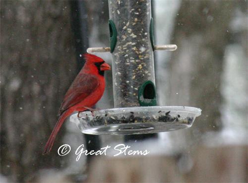 cardinal02-23-10.jpg