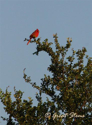 cardinal04-28-11.jpg