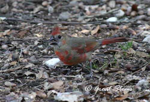 cardinal05-17-11.jpg