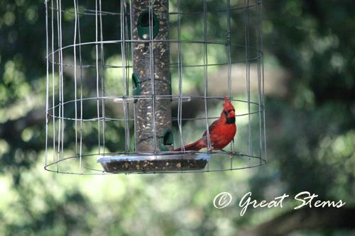 cardinal06-18-10.jpg