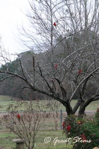 cardinala02-20-11.jpg