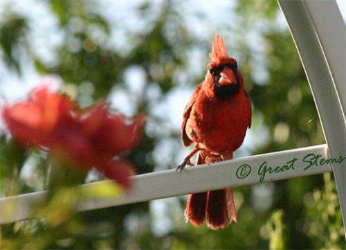 cardinala07-10-11.jpg