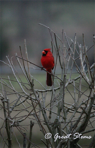 cardinalb02-20-11.jpg