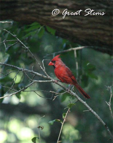 cardinalb06-18-10.jpg
