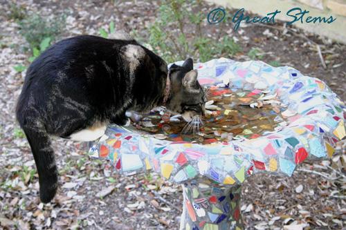 catbirdbatha03-14-10.jpg