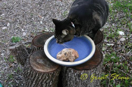 catbirdbathb03-14-10.jpg
