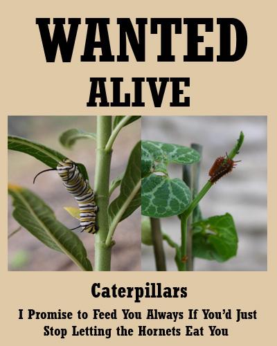 caterpillars07-29-09.jpg
