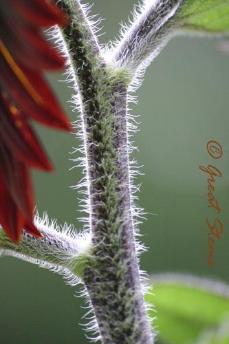 cinnamonsunflowere06-24-10.jpg