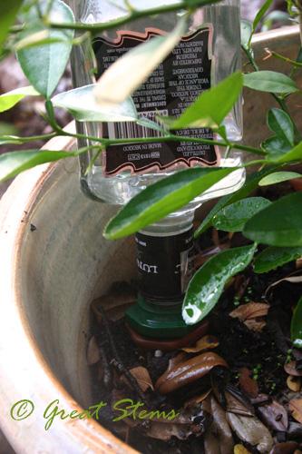 citrusa09-06-09.jpg