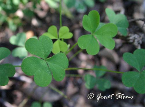 clover10-01-10.jpg