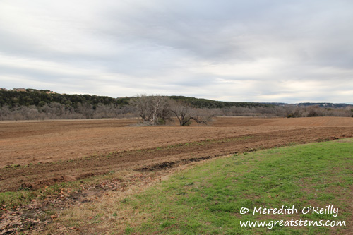 commonsfordprairie02-04-12.jpg