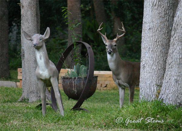 deer10-19-10.jpg