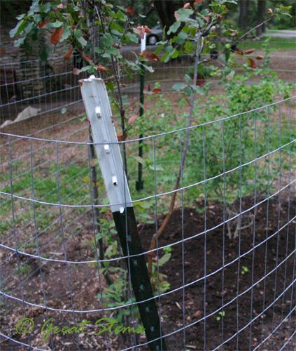 deerfence10-09-09.jpg