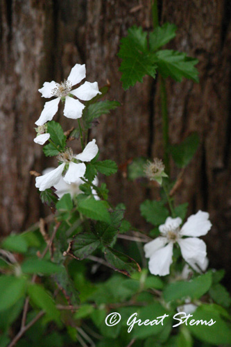 dewberry03-17-11.jpg