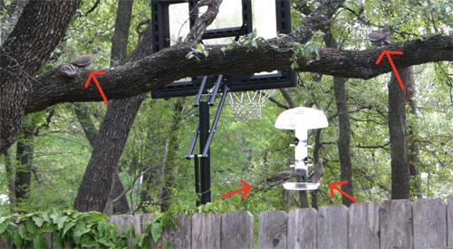 doves07-24-09.jpg