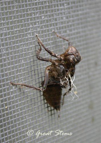 dragonflyshell07-1-11.jpg