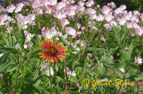 firewheel05-05-10.jpg