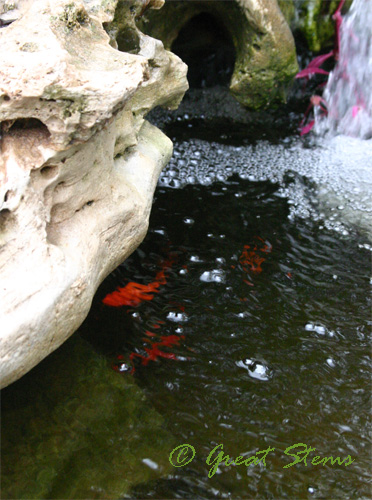 fish10-05-09.jpg