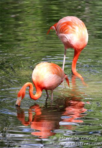 flamingod03-16-12.jpg