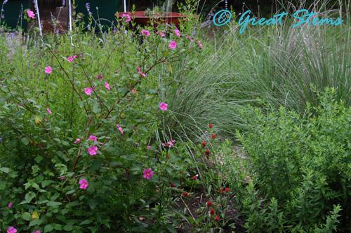 gardenb06-04-10.jpg