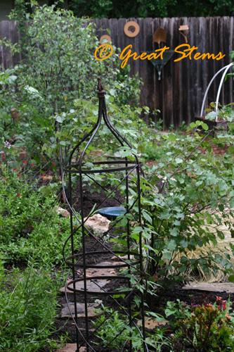 gardenc06-04-10.jpg