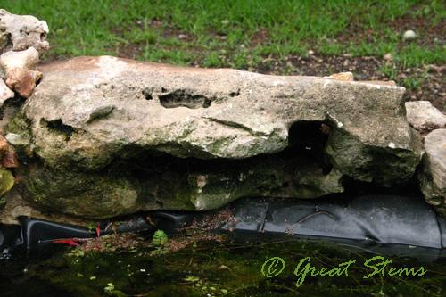 gatorrock10-05-09.jpg