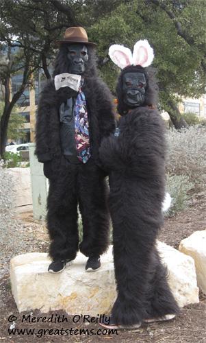 gorillasaa01-21-12.jpg