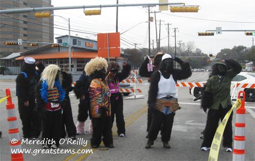 gorillasd01-21-12.jpg