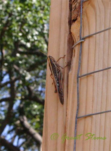 grasshopper08-11-09.jpg