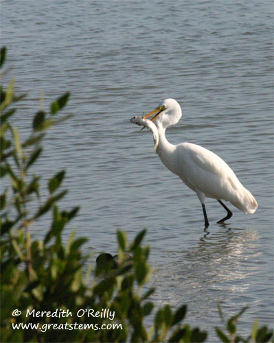 greategret11-17-11.jpg